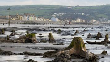 Storm Hannah uncovers Borth 'sunken' underwater forest