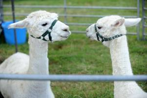 mistley place park: animal park announces closure after 30 years of service at local tearooms