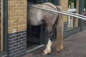 'idiot' men try to lead horse into mcdonald's in staines