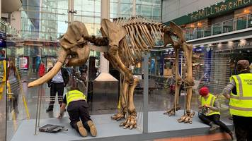 maharajah the elephant arrives at manchester station 147 years late
