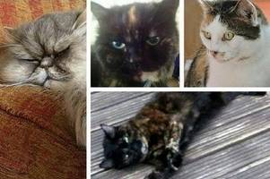 fears 'croydon cat killer' has moved to brighton after the deaths of 25 pets