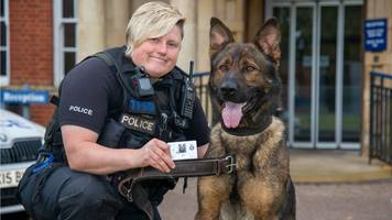 finn's law: northamptonshire police collars honour stabbed dog