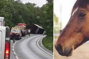 injured horses trapped in serious a39 crash