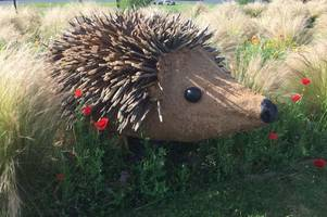 adorable hedgehogs on trafalgar roundabout