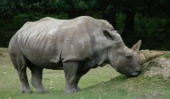 poaching crackdown has caused rhino numbers to 'soar,' tanzanian officials say