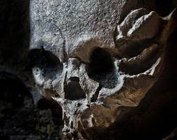 oldest human remains ever found outside africa identified