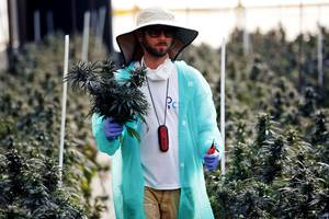 government investigations, fired ceos, and a sector in turmoil: cannabis companies are facing a hidden threat, and the honeymoon might be over