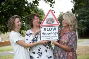 signs to be erected in yeovil as part of effort to stop hedgehogs becoming 'victims of the road'