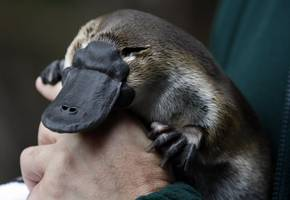 A Michigan congressperson said Facebook's Libra cryptocurrency reminded him of a 'platypus' but then decided it was more like a traveler's check (FB)