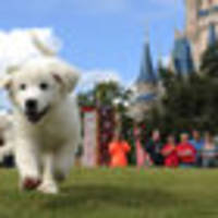 florida issues rabies alert for disney world