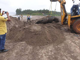 skeleton of whale washed ashore divegar beach to be displayed at museum in airoli