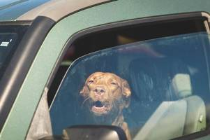 crews called to diner car park after caged dogs locked inside van in sweltering heat