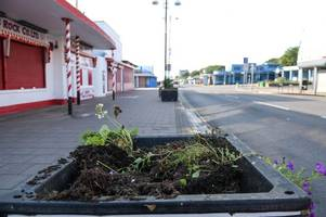 mindless vandals rip flowers from planters along cleethorpes promenade