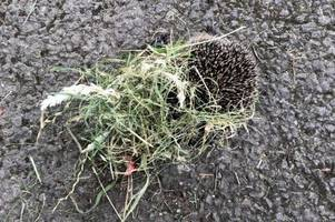 hedgehogs seen cut to pieces after council grass cutting in bargoed, caerphilly