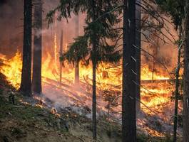 spain fights wildfire on canary islands, evacuates 1,000