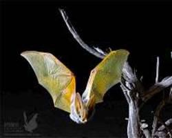 tiny gps backpacks uncover the secret life of desert bats