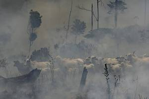 burning brazil threatens the us' security