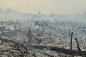 Burned areas of the Amazon could take centuries to fully recover