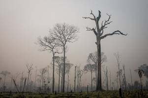 the amazon rainforest fires are pumping the co2 trees normally absorb out into the atmosphere