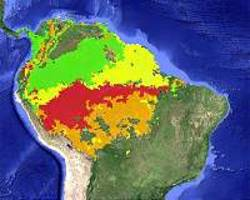 Should the international community protect the Amazon?