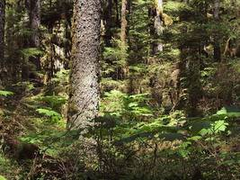 How Trump may bulldoze 'America's Amazon'