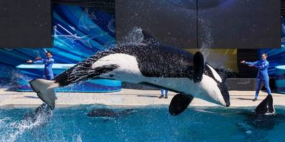 seaworld suffers biggest plunge of 2019 as ceo resigns after just 7 months (seas)