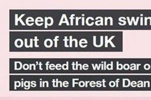 government warns visitors not to feed wild boar to stop african swine fever coming to the uk