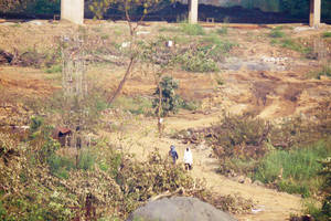 supreme court halts aarey massacre, but only 44 trees are left