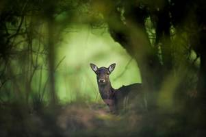 residents call police after spotting deer roaming around beeston