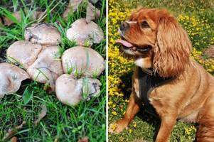 warning to pet owners as dog dies hours after eating poisonous mushrooms on scunthorpe playing field