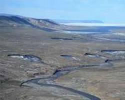 Melting Arctic ice accelerates spread of deadly virus in marine mammals