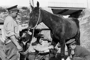 mum launches special remembrance parade for horses killed in world war one