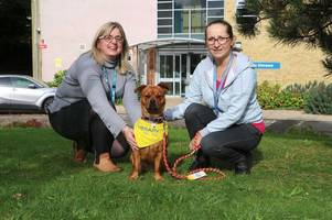 the adorable therapy dog putting a smile on patients' faces in scunthorpe