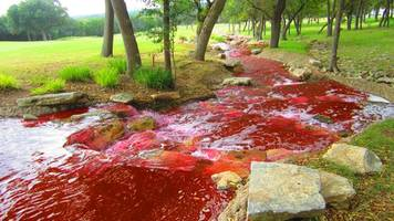 south korean river runs red with blood of 47,000 slaughtered pigs