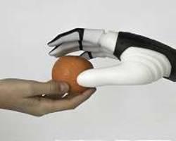 Brain enlightens the origin of human hand's skill