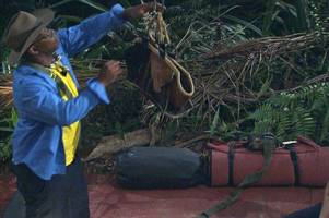 ian wright 'willing to pay £1,000 for cadbury creme egg' in i'm a celebrity