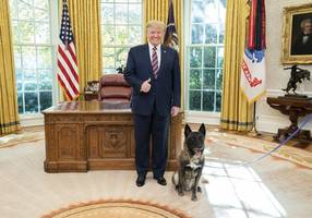 conan the dog gets hero's welcome at white house after raid