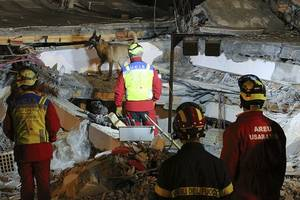 albania's search for quake victims ends; death toll up to 50