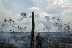 brazil president claims 'cool guy' leonardo dicaprio paid money to wwf to 'torch' amazon rainforest