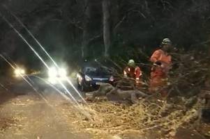 car damaged as fallen trees cause chaos on devon roads - live updates