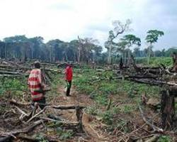 beleaguered dr congo rainforest attacked on all sides