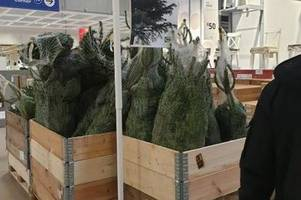 ridiculously cheap £1 ikea christmas trees disappear straight away
