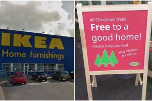scots ikea giving away real christmas trees for free – with hundreds still in stock