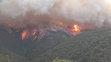 australia wildfires: more than half a billion animals and plants killed as glaciers turn black