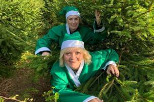 helpful 'elves' wanted to collect christmas trees in lincolnshire