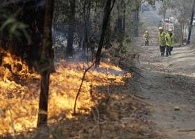 australia fires: number of animals feared dead soars to over 1 billion