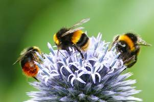 anger as council leader accused of 'rank hypocrisy' in row over bees
