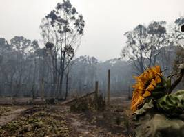 australian bushfire death toll rises to 27: pm