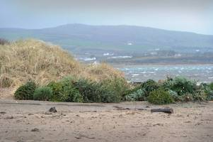 sand dunes plan for ayr beach launched by rangers