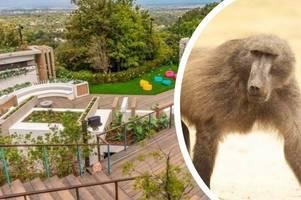 love island bosses fear aggressive baboons could invade villa